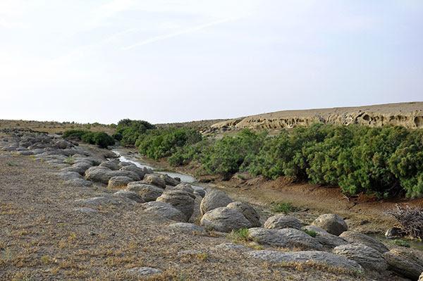 Каньон Кемаль-Ата Здесь, посреди пустыни, непонятно откуда, появился источник и пробил в скалах небольшой каньон.  К источнику приводят на водопой стада овец и верблюдов.  Но самое интересное – это необычные каменные образования, напоминающие яйца динозавров или яйца-зародыши из культового фильма «Чужой».  Здесь их множество, причем множество из них наполовину «замурованы» в стенах каньона.