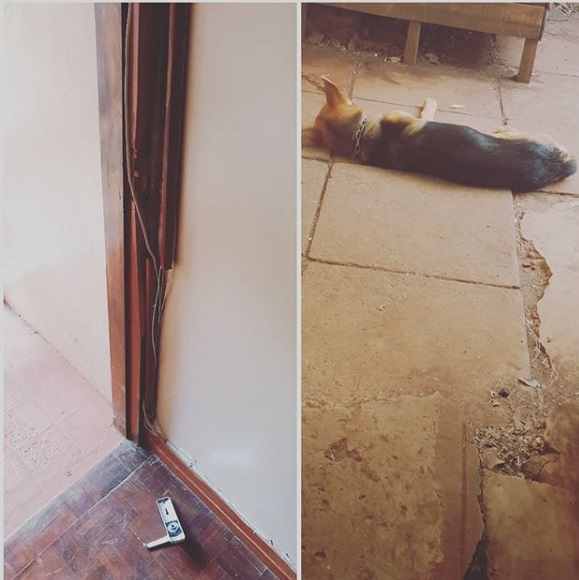 Image result for ringtone house theft of drugging and dogs tying