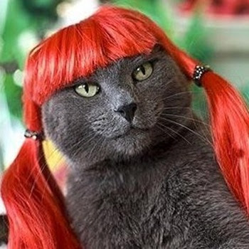 gatto grigio con una parrucca rossa