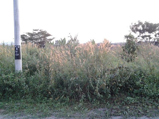 Khidmat Potong Rumput Dan Meracun