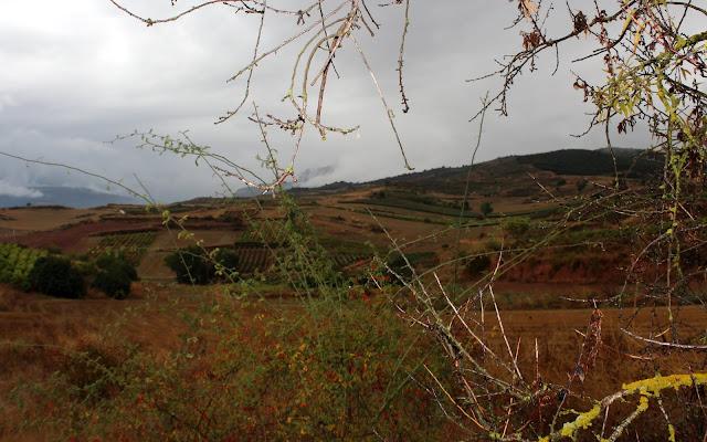 Paisajes por La Rioja Alta