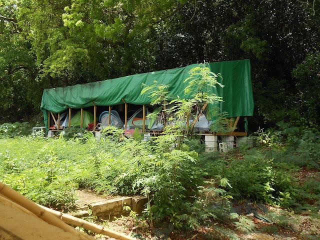 Tents in the Tropics for WWoofer Volunteers