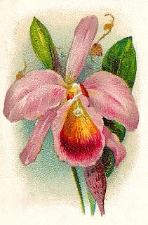 flower orchid trade card illustration antique digital download