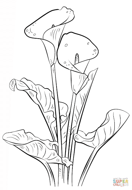 Click The Calla Lily Coloring Pages