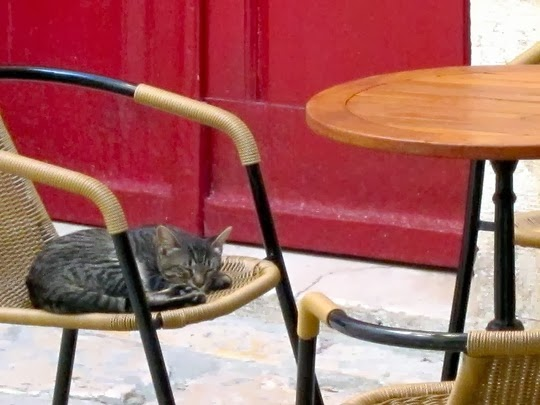 cats of rovinj