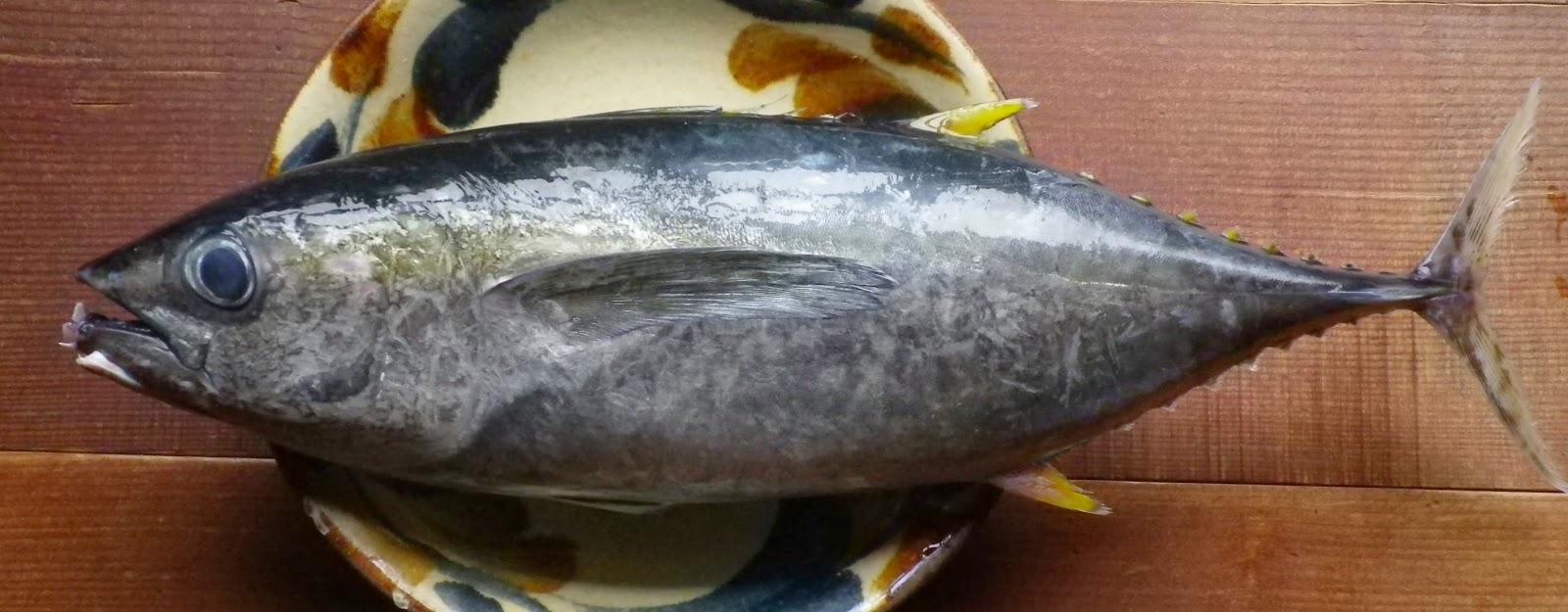 鎌倉腰越産キメジ