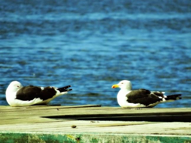 Aves em trapiche da Lagoa da Conceição, em Florianópolis