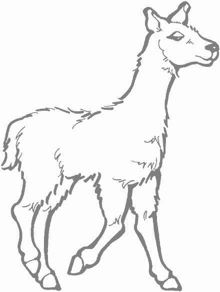 Dibujos De Llamas Y Alpacas Imagui