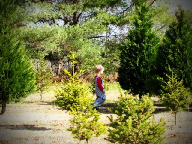 A Little Peace in our Heaven: Bluebird Christmas Tree Farm