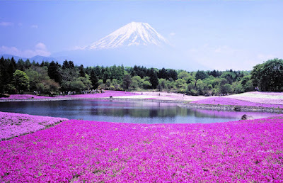 Resultado de imagen de paisaje con flores lilas