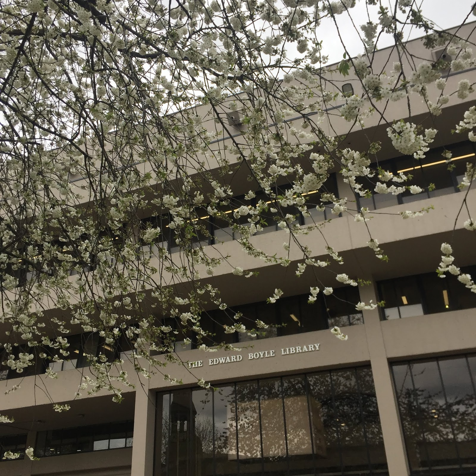 Blossom and Edward Boyle Library