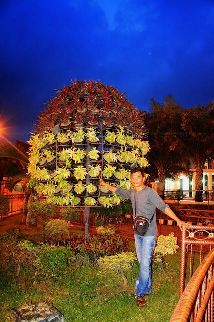 Pohon hias yang bisa dipindah