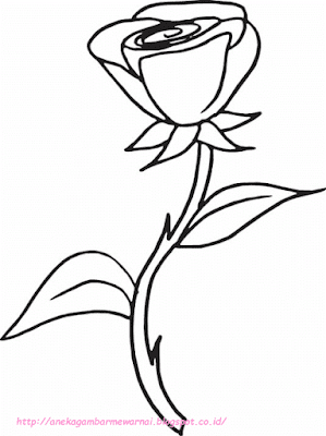 gambar bunga mawar - 12