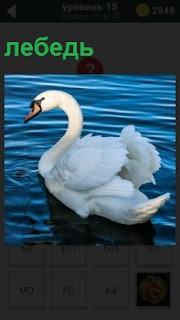 Одинокий лебедь плавает в водоеме склонив голову и грустит в одиночестве