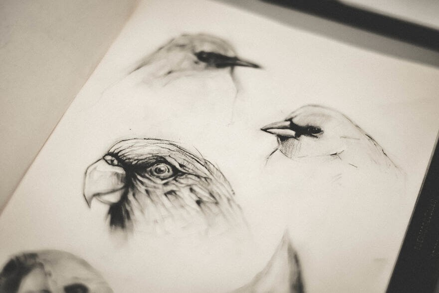 11-The-Birds-Mike-Koubou-Stylized-Sketchbook-Animal-Pencil-Drawings-www-designstack-co