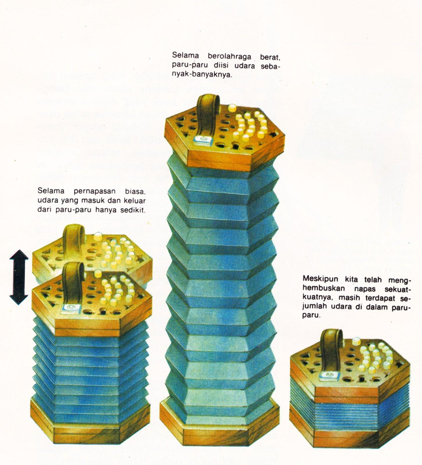 Volume Udara Pernapasan Dalam Tubuh - TexBuk Materia.