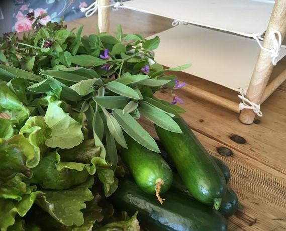 Grønnsaker og urter fra hyttehagen
