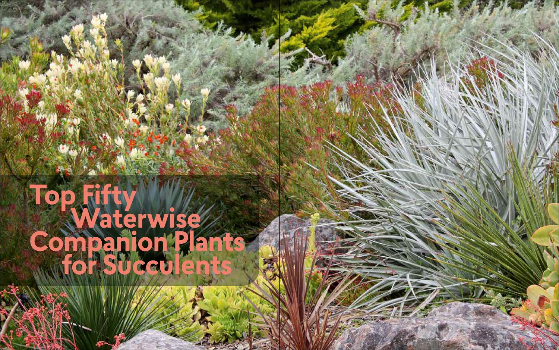 Gerhard Bock S Review Of Designing With Succulents Debra Lee Baldwin