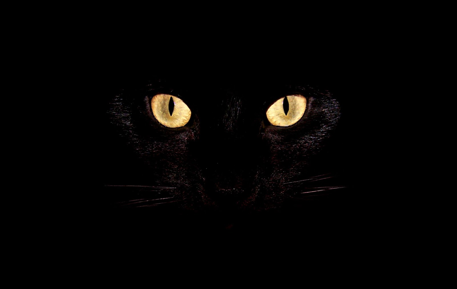 Black Cat With Pink Scary Eyes: 1000+ Images About HALLOWEEN On Pinterest