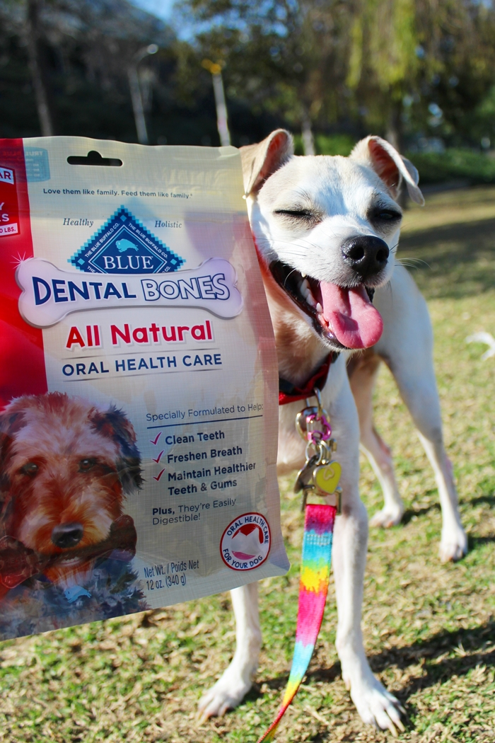 Chewy Com Blue Purina Beyond Natural Grain Free Wet Dog Food