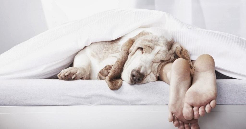 la nueva ilustraci n evolucionista the new evolutionary enlightenment dormir en el. Black Bedroom Furniture Sets. Home Design Ideas