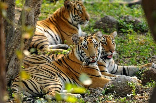 Conservation of Forest and Wildlife, Science Cbse / Ncert Revision Notes, Class 8
