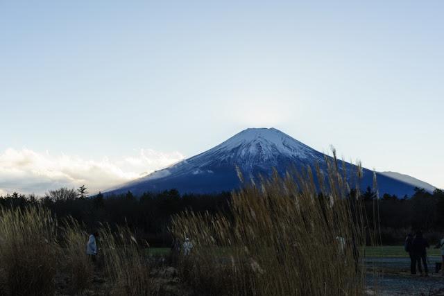 山中湖花の都公園から望む富士山