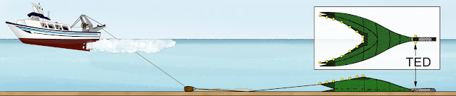 TED y barco 002 - Cañabota que fue donada a la ciencia por la embarcación el Paraiso al proyecto ECEME