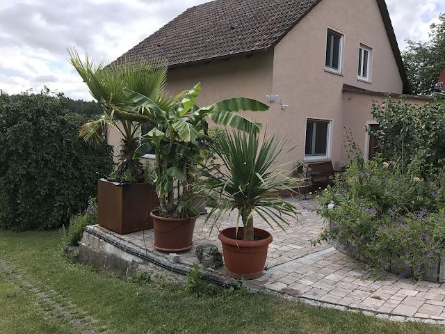 Palme, Banane und Drachenbaum - das Terrassen-Dreigestirn (c) by Joachim Wenk