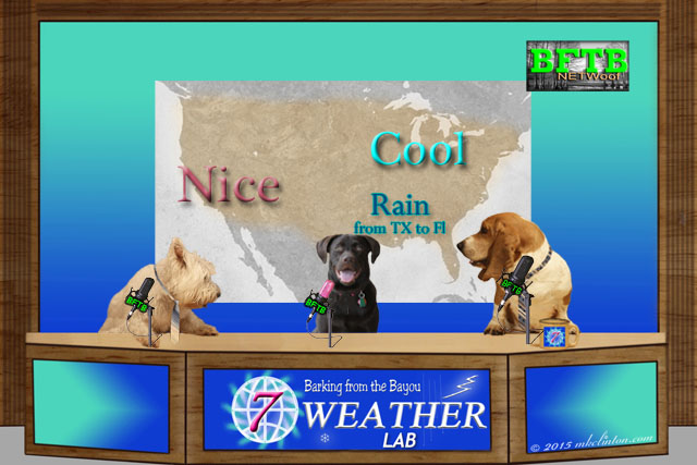 BFTB NETWoof Weather set with dog news