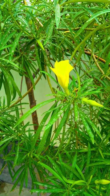 flower photo download