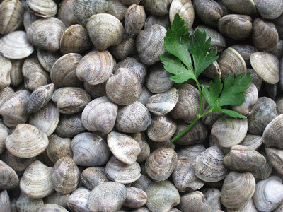 Tiny Arselle or Telline Clams from Viareggio