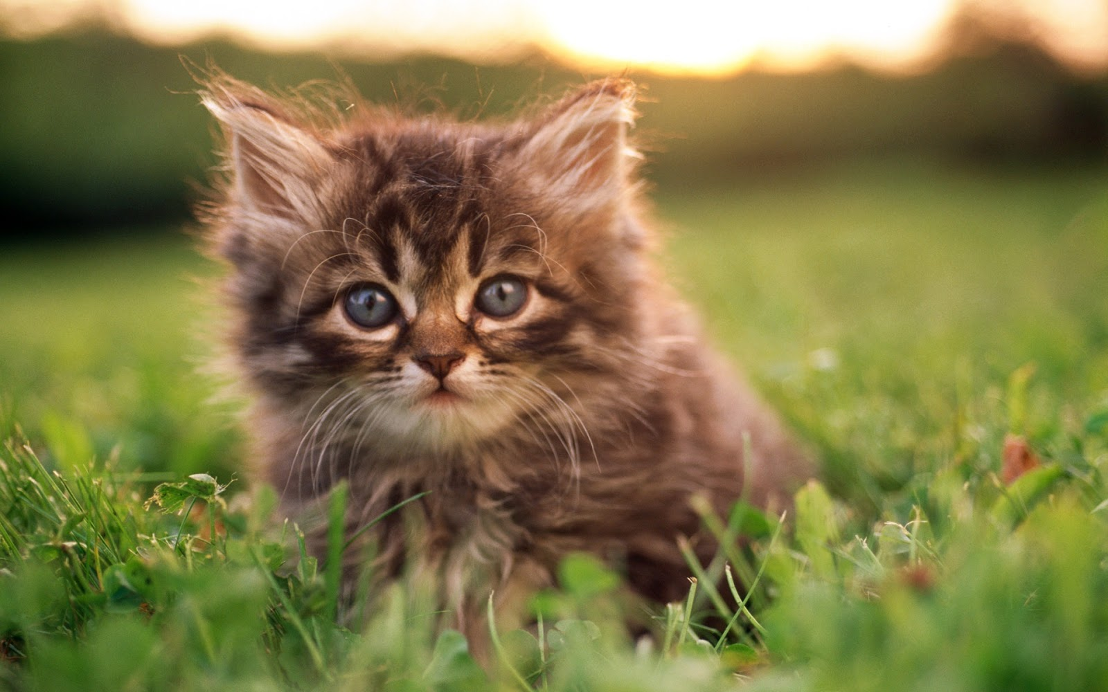 Kittens In Grass Wallpapers