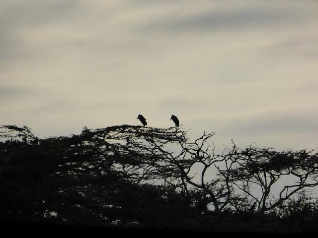 Nairobi National Park, aves