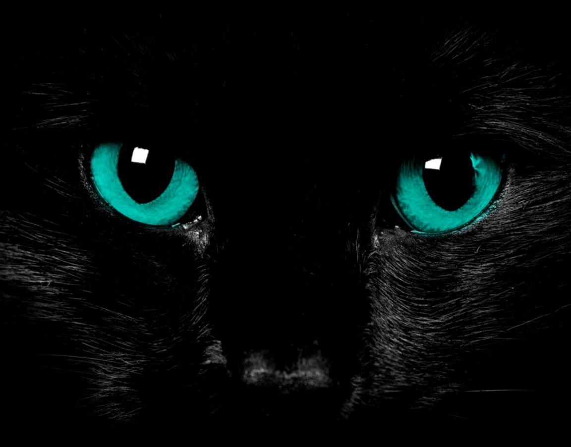 Cute Cat Green Eyes Wallpaper Hd Tabb Wallpapers