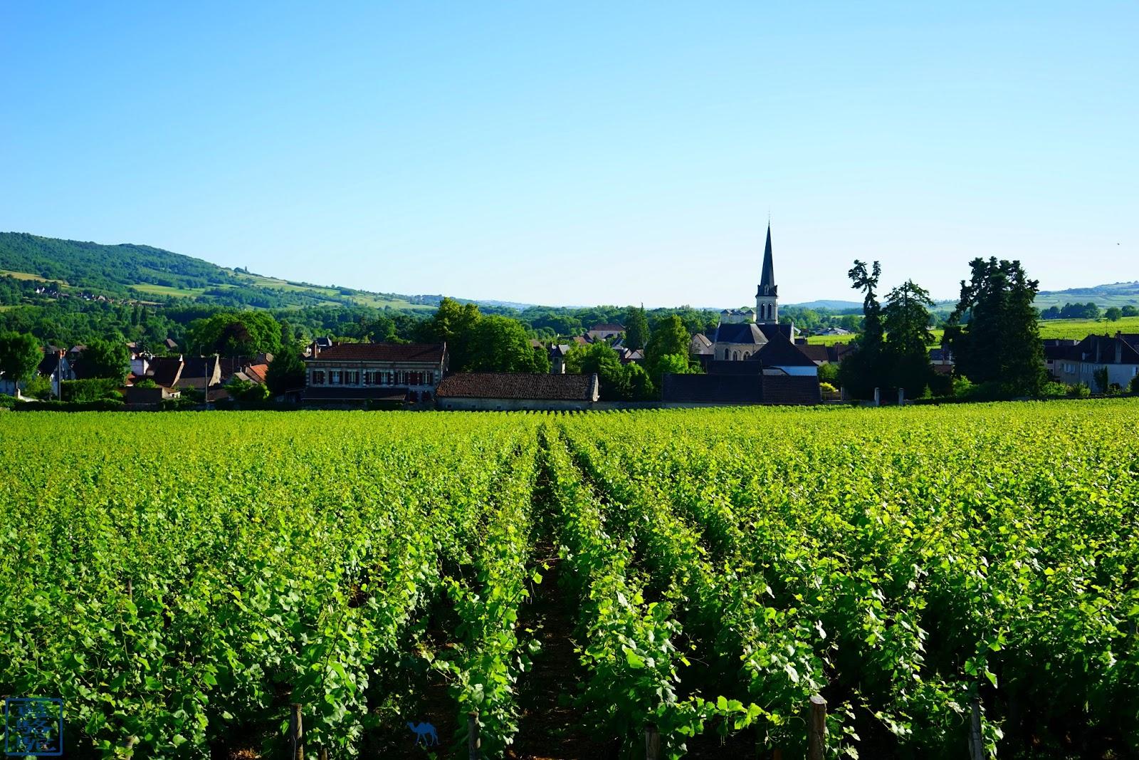 Le Chameau Bleu -  VIgnes de Santenay
