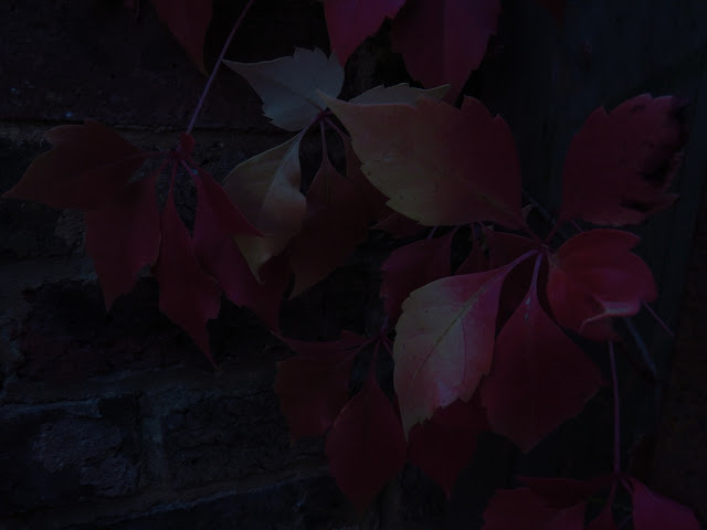 dark red autumn leaves