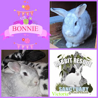 Bunny for adoption Melbourne