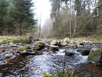 die Bode im Harz