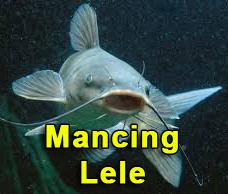 tips mancing ikan lele