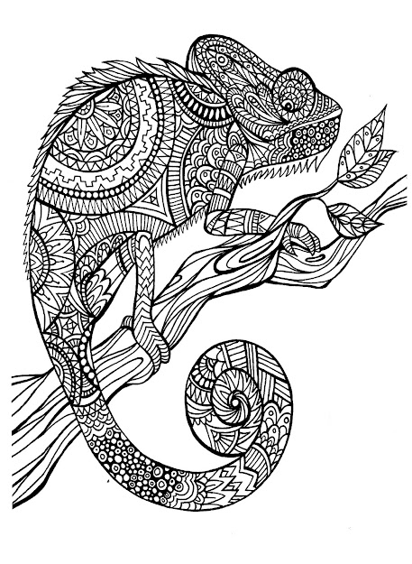 This Magnificent Cameleon Reminds Me Of Patient At The Exotic Animal  Clinic Worked For Love Him Even Without His Colors Adult Coloring  Pages