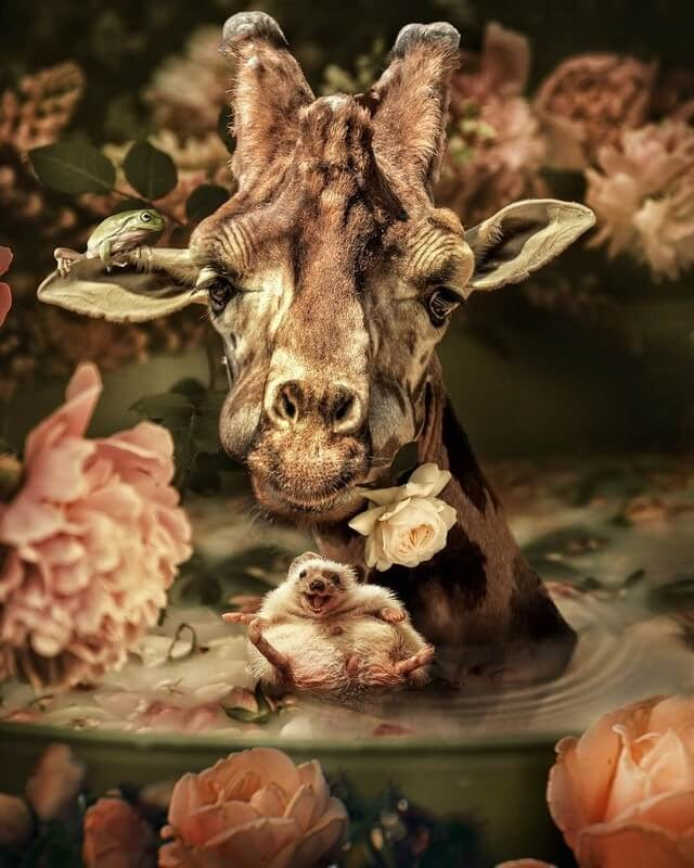 12-Happiness-Marcel-van-Luit-Digital-Art-Animals-Photos-www-designstack-co