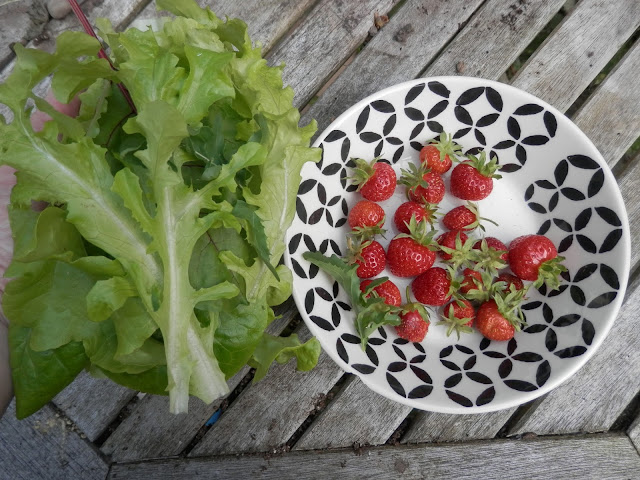 My home grown harvest, June 2017.  What I grew in my UK suburban, permaculture garden. By UK garden blogger secondhandsusie.blogspot.com #ukpermaculture #gardenharvest #organicgarden #raisedbeds #ukgardenblogger