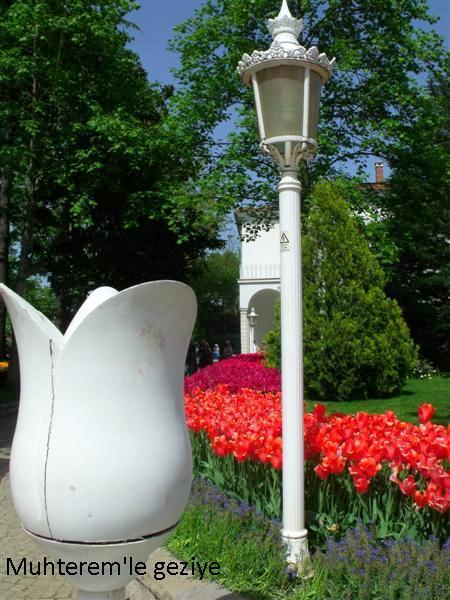 tulips festival