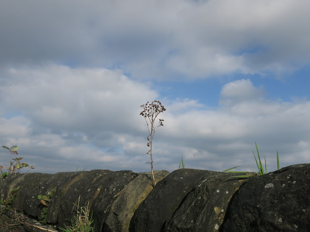 Plant on black wall with blue sky, clouds, grass and rowan.