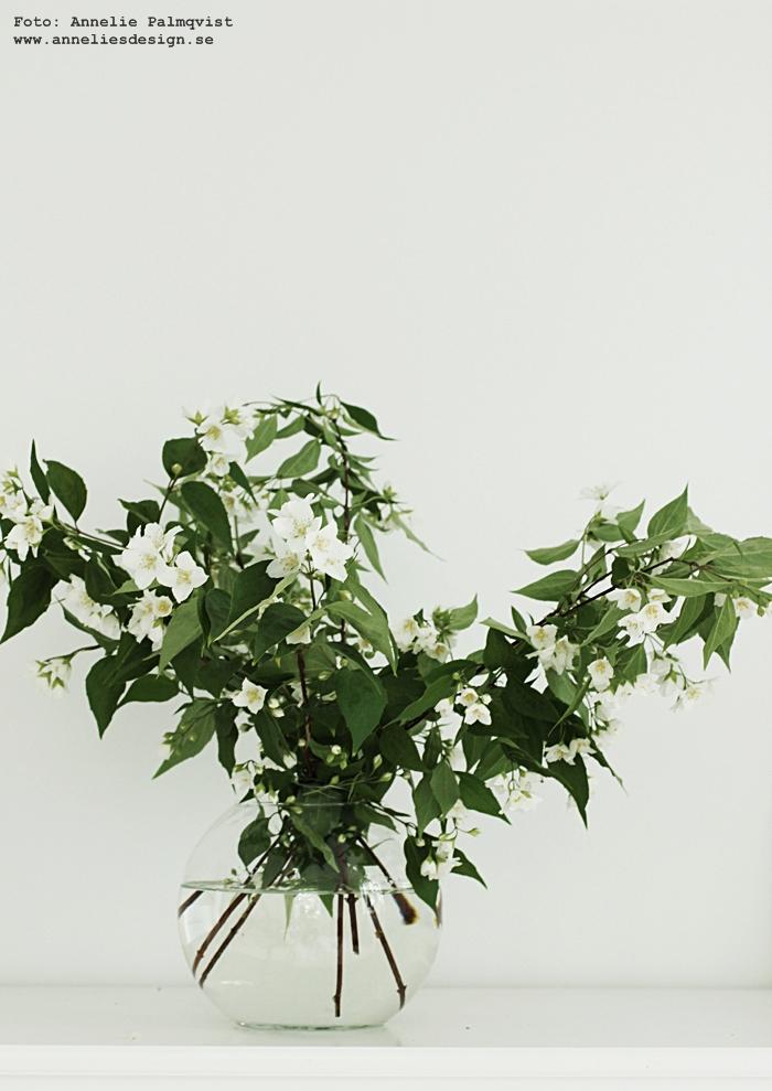 vita blommor, buske, trädgård, bukett, buketter, vas, rund vas,