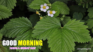 fresh morning wishes small white flowers big green leafs greetings