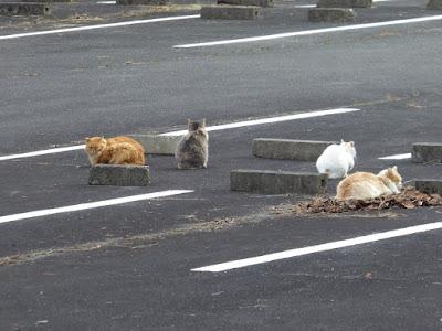 くろんど池 駐車場 猫