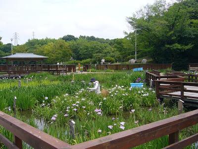 大阪府枚方市・山田池公園 花しょうぶ園