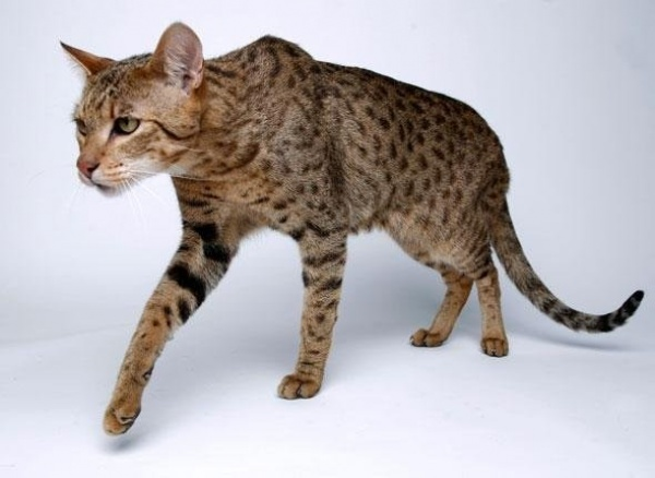 [صورة مرفقة: cat%2B10.jpg]